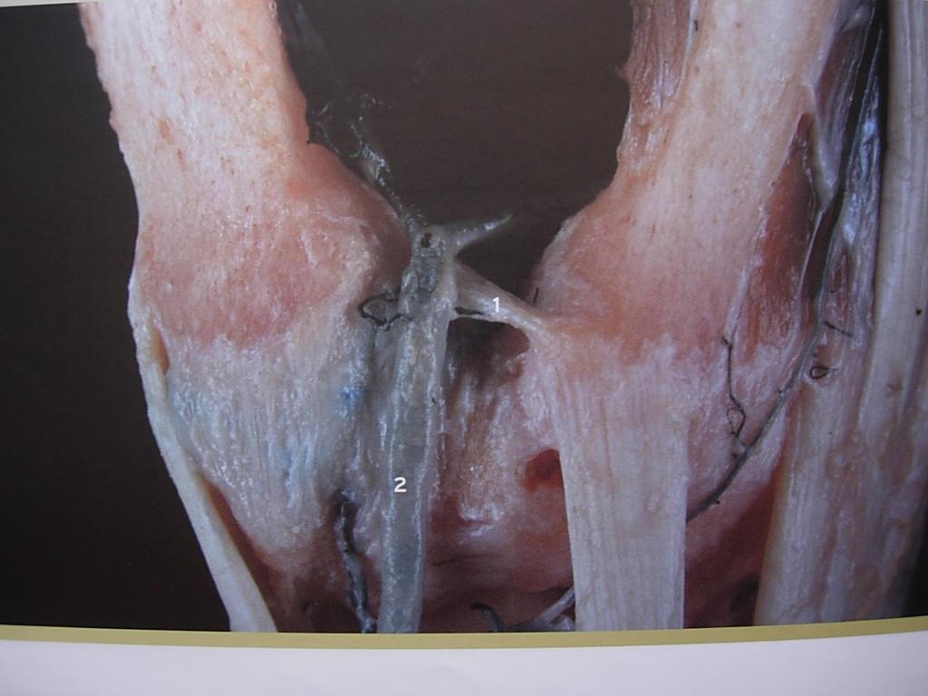 anatomia funcional Archivos - Hand Therapy BCN